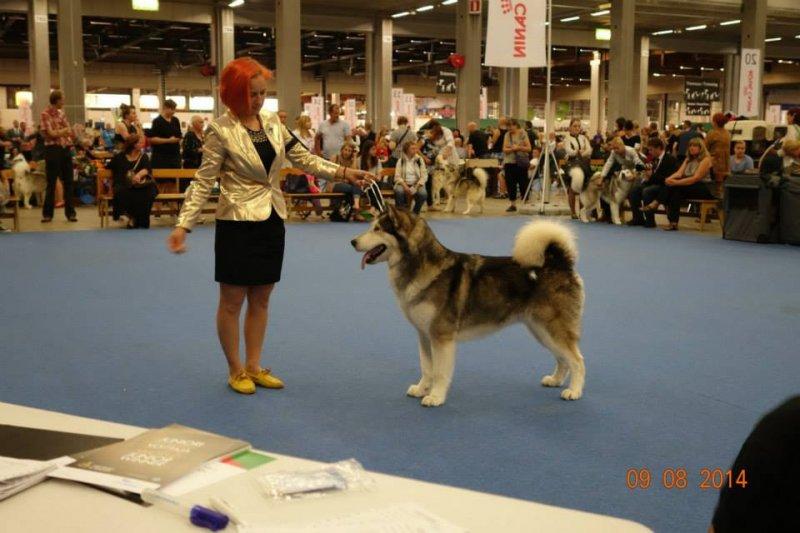http://chesvik-top.ru/en/wp-content/gallery/nikita_pics/10557456_10152665999570844_5758835564464760696_n.jpg